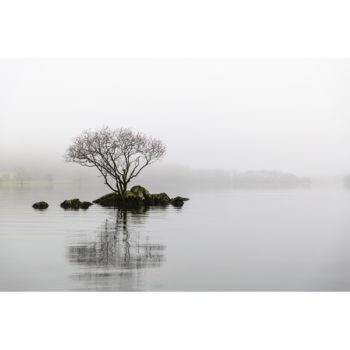 A Lone Tree On Coniston Water. The English Lake District.jpg