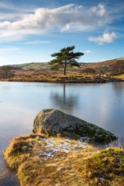 The Lone Tree On Kelly Hall Tarn