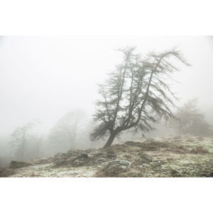 A Lone Tree In The Mist. Gummers How 1