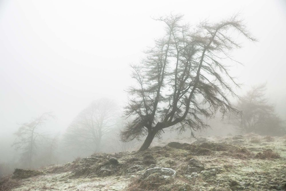 A Lone Tree In The Mist. Gummers How