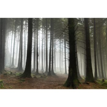 Mist Rolling Through The Lake District Woodland Loose Print