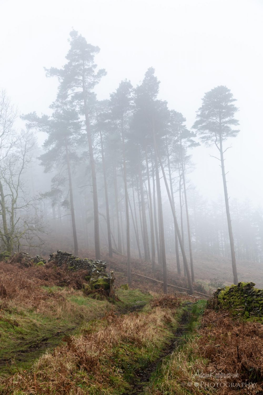 Woodland Photography In The Mist 1