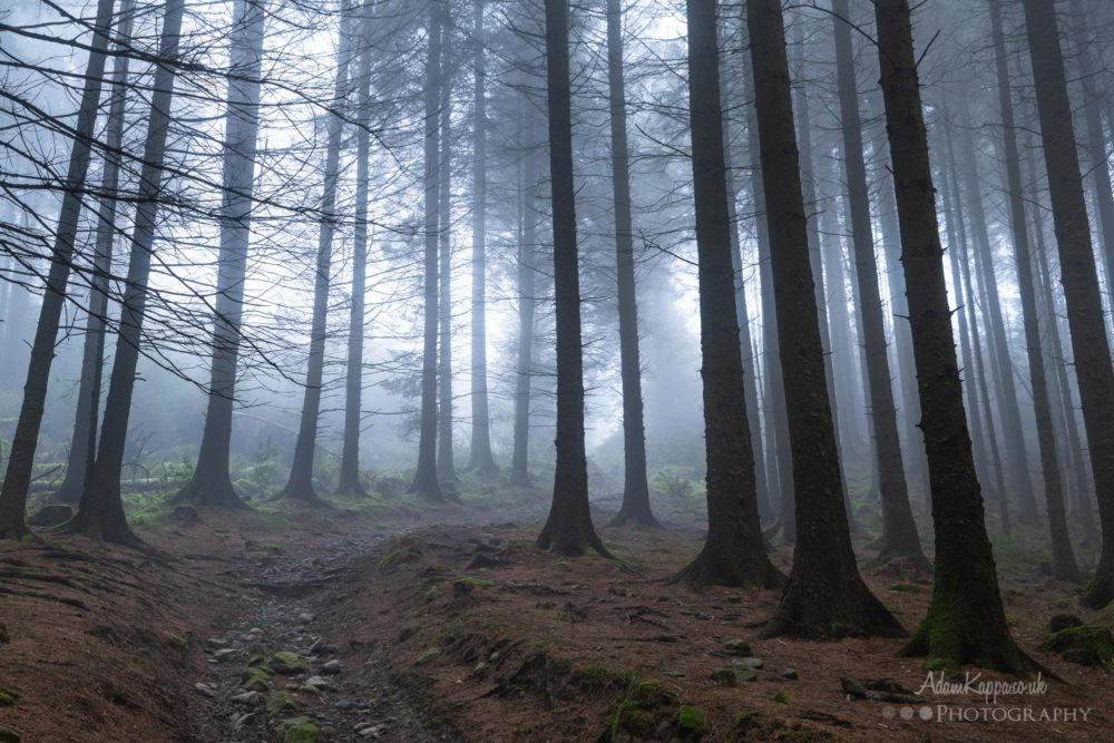 Woodland Photography In The Mist 4