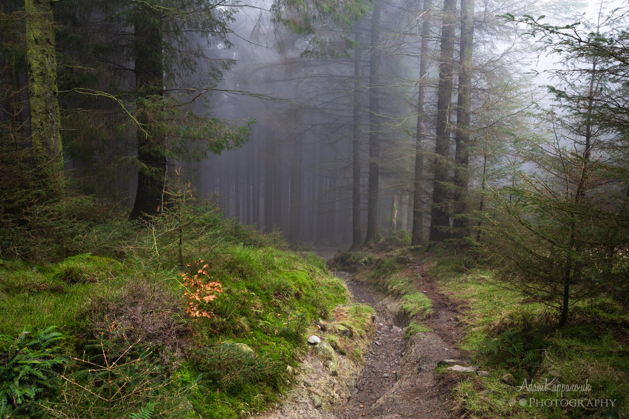 Woodland Photography In The Mist 5