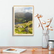 Herdwick Sheep And Great Gable From Illgill Head2