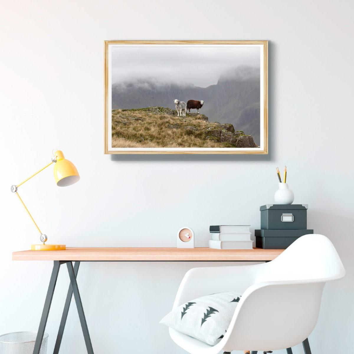 Herdwick Sheep And The Scafell Range
