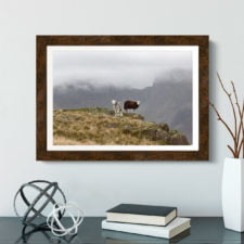 Herdwick Sheep And The Scafell Range1